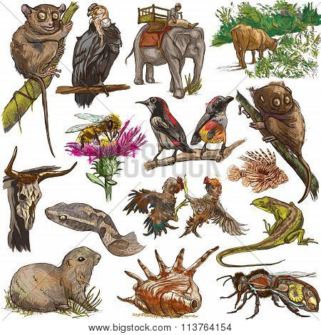 Animals Around The World. Freehand Drawings.