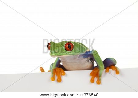 The photo of the red eyed tree frog, separated.