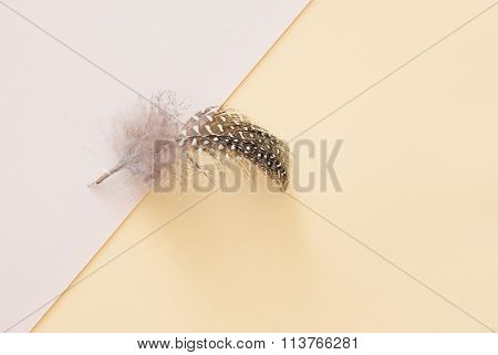 Brown Feather On Yellow Paper Background