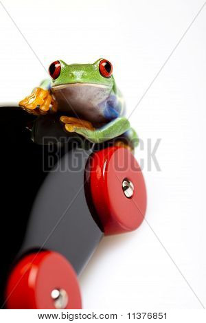 Frog on toy