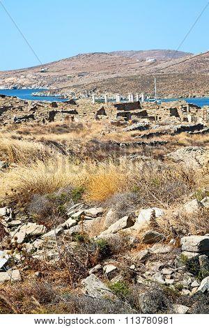 Bush   In Delos The  Old Ruin Site