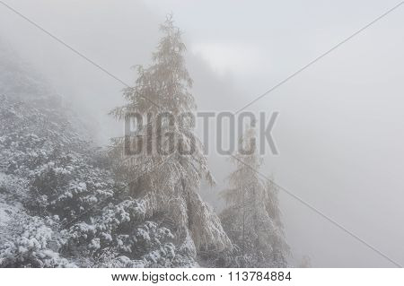 Landscape With Winter Forest And Fog