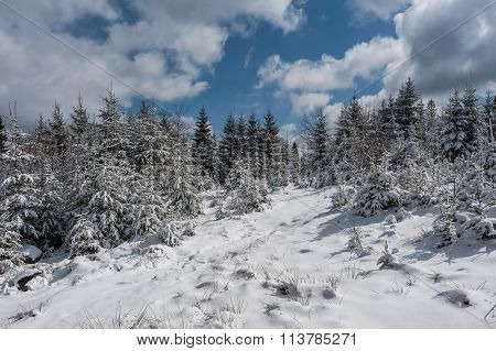 Winter Landscape With Sunny Forest