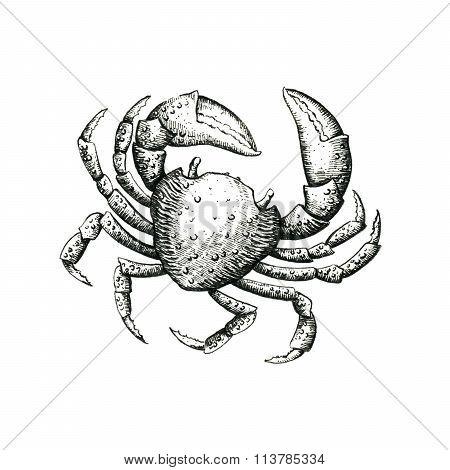 Crab Hand-drawn