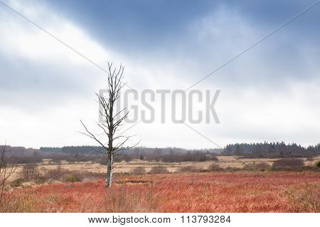 Single Tree In Belgium Swamp