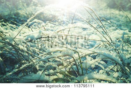 Winter landscape of frozen meadow.