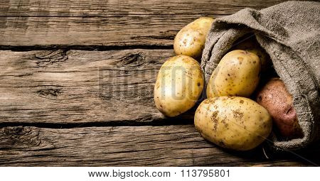 Fresh Potatoes In An Old Sack On Wooden Background. Free Place For Text.