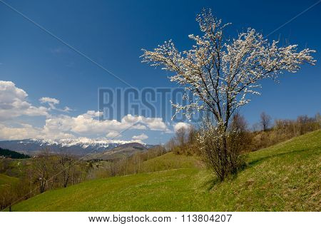 Blossom Tree In Mountains