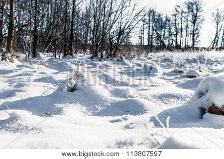 Winter. Landscape. Background.