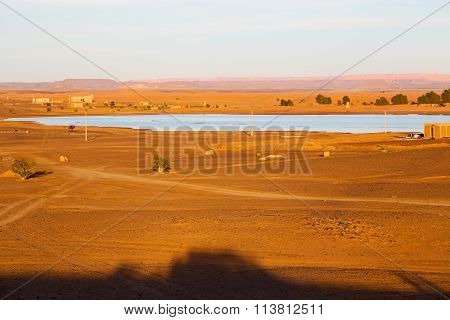 Sunshine In The Lake Yellow Morocco Sand     Dune