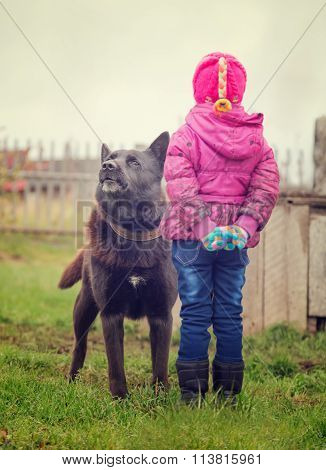 Angry dog stares at the child.
