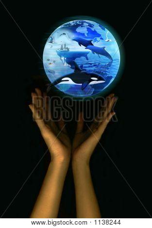 Save The Earth - Marine Life