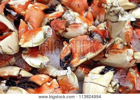 Crab Pincers