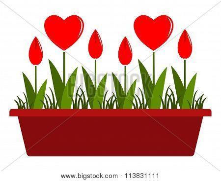 Heart Flowers In Planter