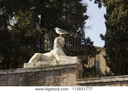 Sphinx Statue In Piazza Del Popolo