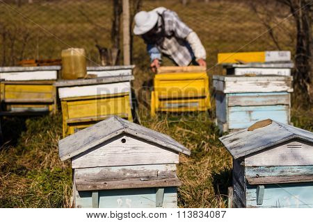 Beekeeper working on beehives with honeycomb with bees in hands producing herbal honey