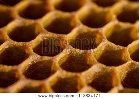 Honeycomb cells close-up from beehive. Beekeeping production.