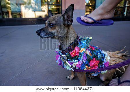 Hawaiian Shirt Dog