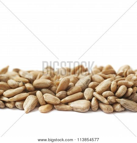 Line of sunflower seeds isolated
