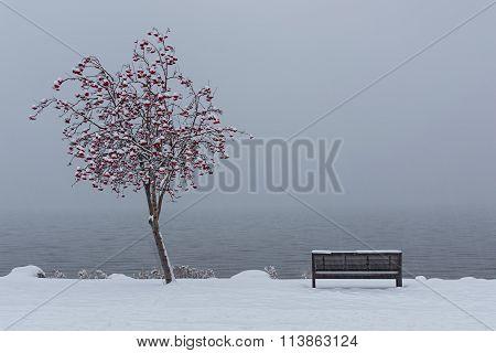 Park Bench On Okanagan Lake Kelowna British Columbia In Winter