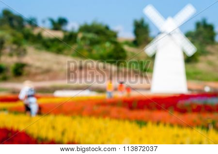 Blurred Of Beautiful Of Red Yellow And Orange Celosia Flower With White Windmill