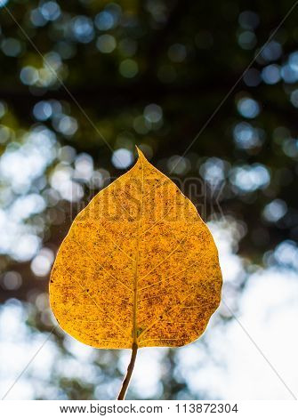 Natural Textured Of Yellow Leaf On Blurred Bokeh Background