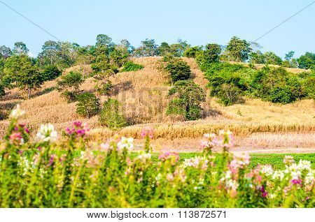 Yellow Grass Land With Clear Blue Sky On Day Noon Light