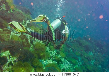 Scuba Diving On Coral Reef In Sea