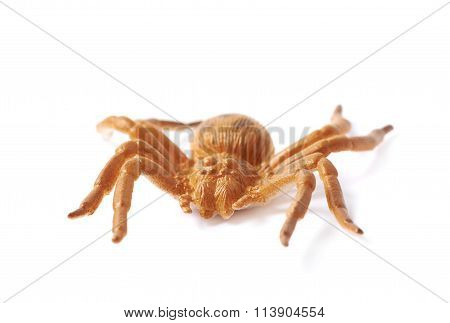 Fake rubber spider toy isolated