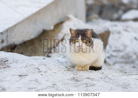 Street cat having rest while sitting on a snow at cold winter day