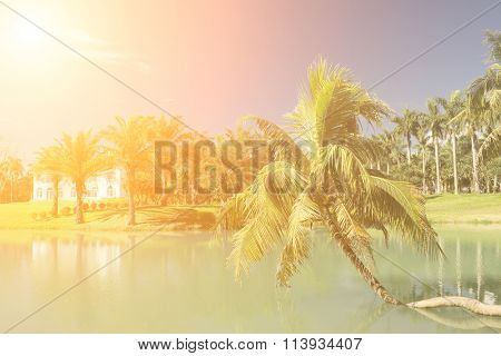 Vocation scenery with tropical tree with lake under blue sky.