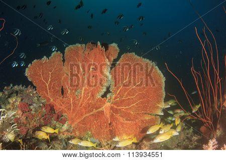 Coral reef tropical fish underwater sea ocean