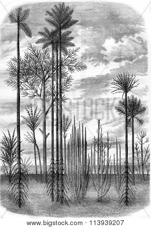 Landscapes of the primitive world, vintage engraved illustration. Magasin Pittoresque 1878.