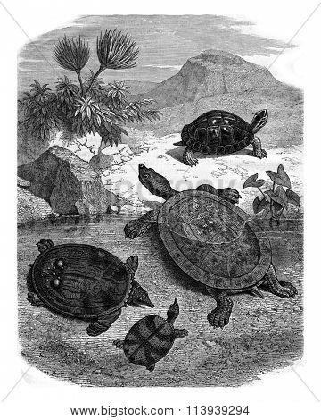 Turtles of the Natural History Museum, vintage engraved illustration. Magasin Pittoresque 1878.