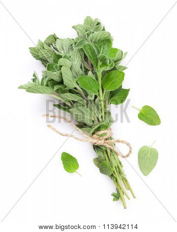 Fresh garden oregano herb. Isolated on white background