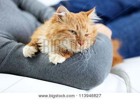 Man's hand holding a fluffy red cat