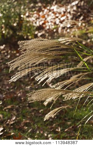 Long Autumn Fronds