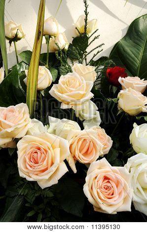 New Cream Rose Beautiful