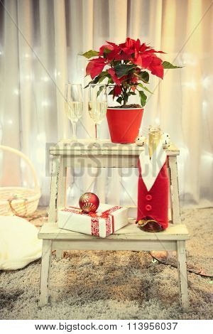 Christmas flower poinsettia and champagne in glasses, indoor