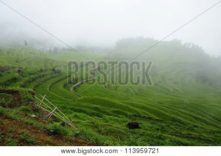 Rice Terraces of Yunhe China