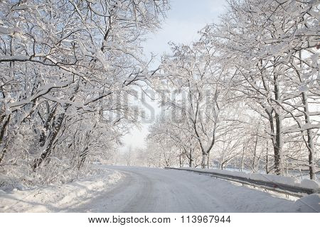 Empty snow covered forest road in winter landscape