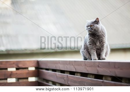 Cat Sitting On The Edge Of Parapet