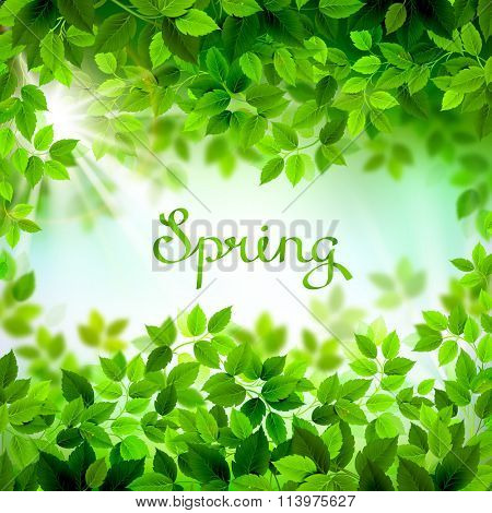 written word Spring. Season branches with fresh green leaves