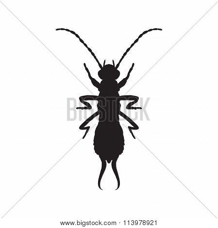 silhouette Forficula auricularia. Earwig silhouette. Sketch of Earwig. Earwig silhouette isolated on