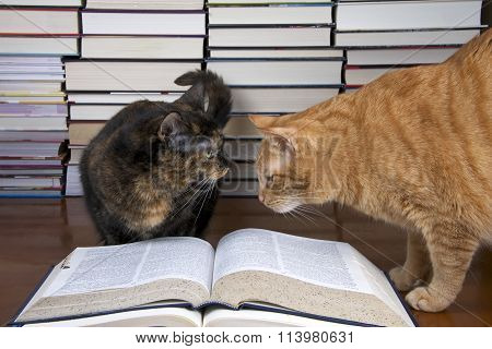 Torbie tortoiseshell Tabby Cat with Orange Tabby Cat over book with piles of books in the background