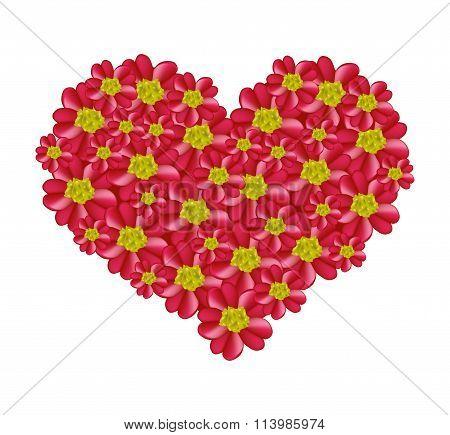 Red Yarrow Flowers in A Heart Shape