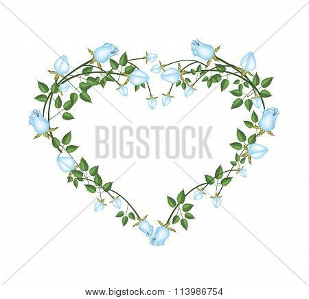 Beautiful Blue Roses Flowers in Heart Shape