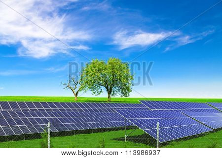 Solar energy panels before trees and blue sky