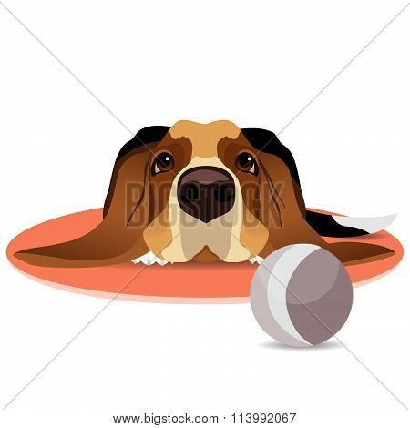 Sad basset hound on circle mat and ball