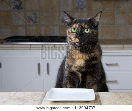 Tortoiseshell or Tortie Tabby cat sitting at the counter with an empty plate waiting for food.